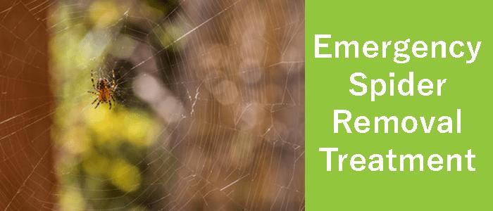 Emergency Spider Removal Treatment Iluka