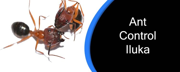 Ant Control Iluka