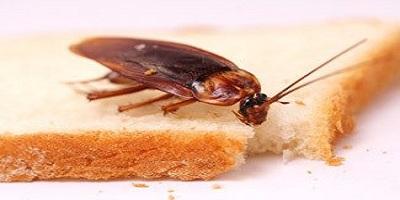 Cockroach Control Iluka